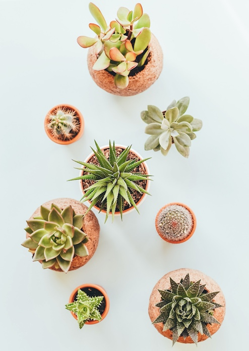 4 Plants to Buy For Your Home at Insignia on M