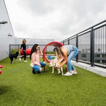 Pet-friendly environment with pet spa, wash station and rooftop dog walk.