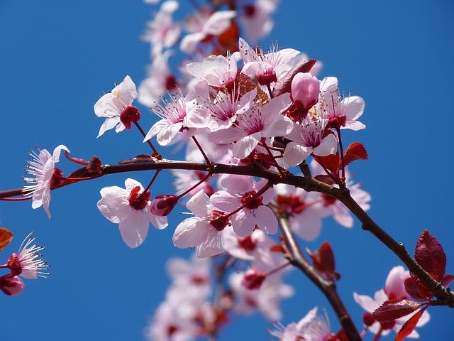 Celebrate the Springtime at the National Cherry Blossom Festival Petalpalooza on April 6